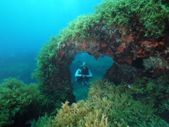 Diving In Malta at Fortizza Reef